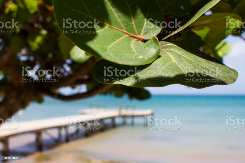 Caribbean Dock in Background stock photo