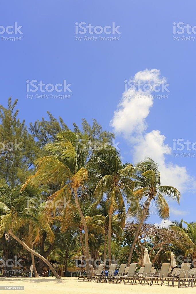 Caribbean: Dream Beach royalty-free stock photo