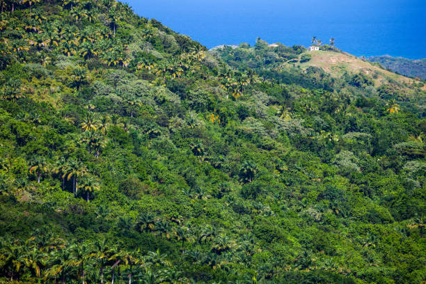 Caribbean landscape with a lonely hut on hill stock photo