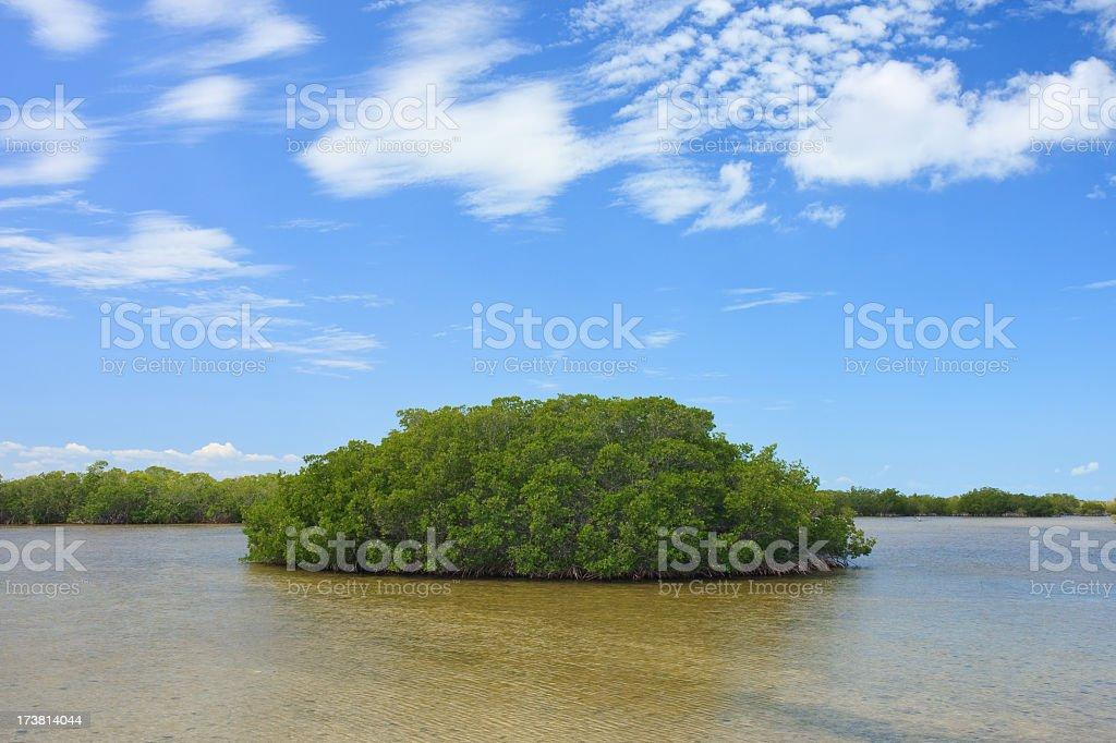 Caribbean Mangroves royalty-free stock photo
