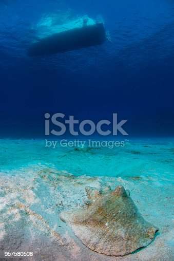Undersea view of the ocean floor, a conch shell and a boat in Little Cayman Island, Cayman Islands