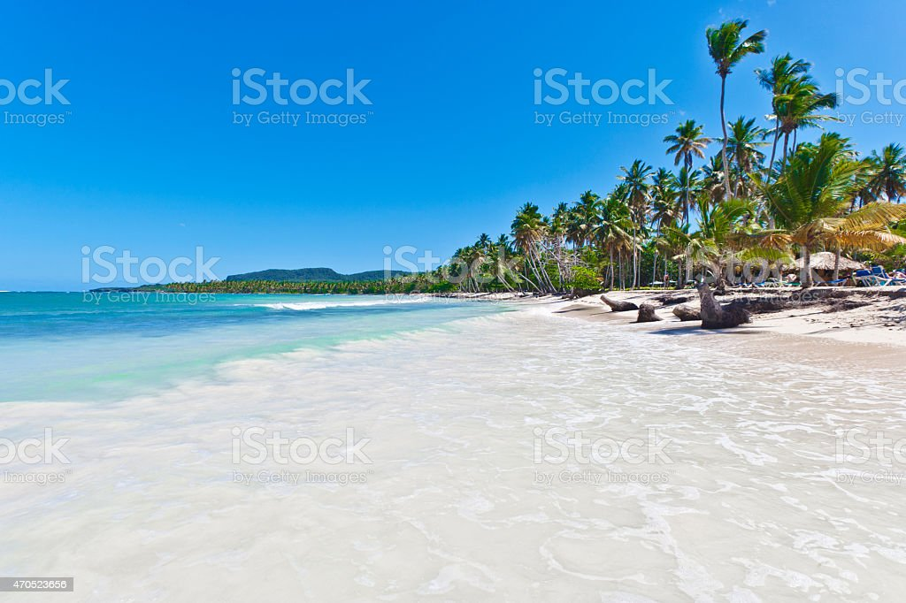 Caribbean palm trees of Las Galeras in Dominican Republic stock photo