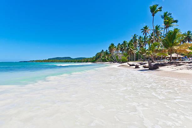 Caribbean palm trees of Las Galeras in Dominican Republic stock photo