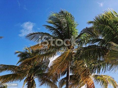 istock Caribbean Palms 1078225894