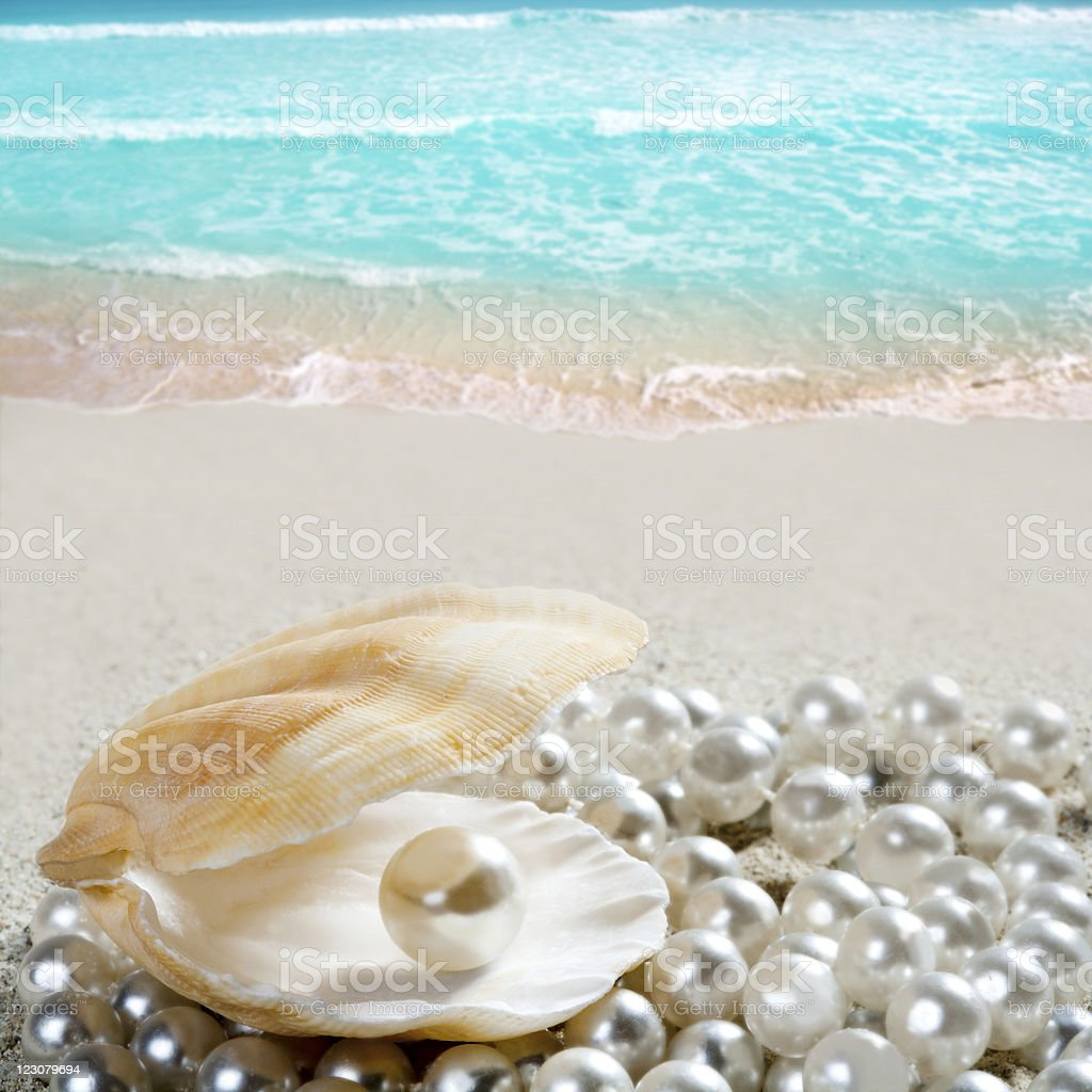 Caribbean pearl on shell white sand beach tropical stock photo