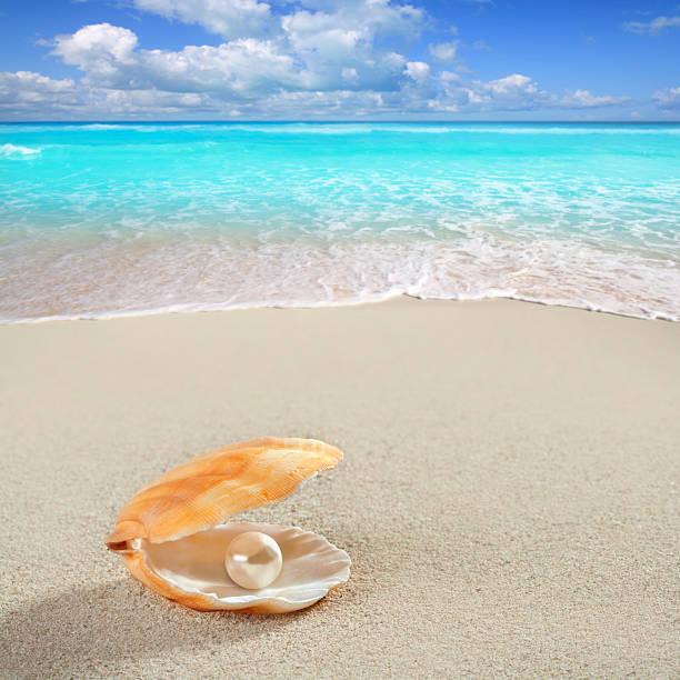 karaiby perła w muszla biały piasek plaża tropikalny - mięczak zdjęcia i obrazy z banku zdjęć