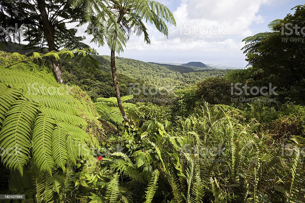Caribbean Rainforest in Guadeloupe stock photo