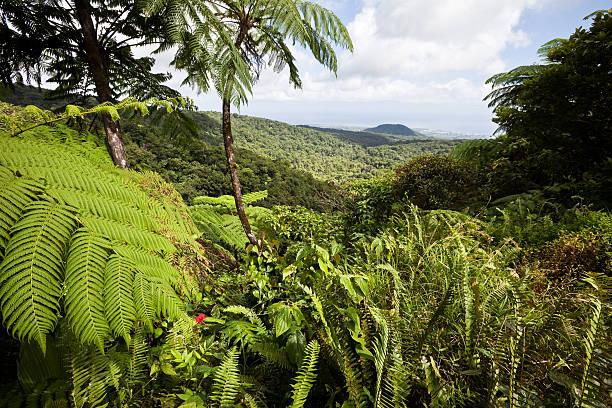 Floresta em Guadalupe, Caribe - foto de acervo