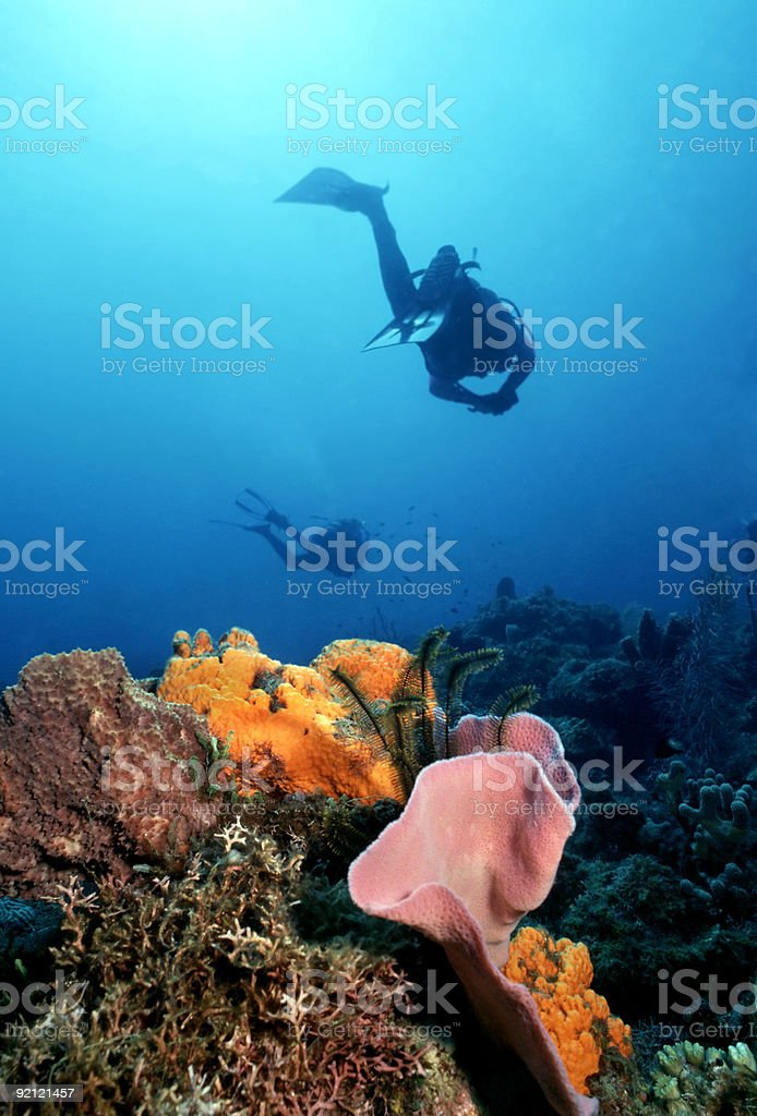 Caribbean reef with scuba divers stock photo