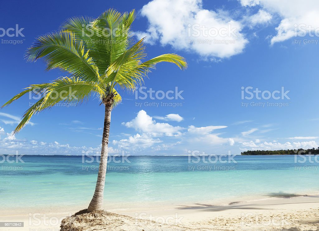 Caribbean sea and coconut palm royalty-free stock photo