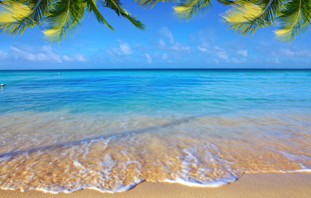 Caribbean sea and palm leaves Beautiful caribbean sea and green palm leaves . Sommer ocean landscape as background. lake waterfowl stock pictures, royalty-free photos & images