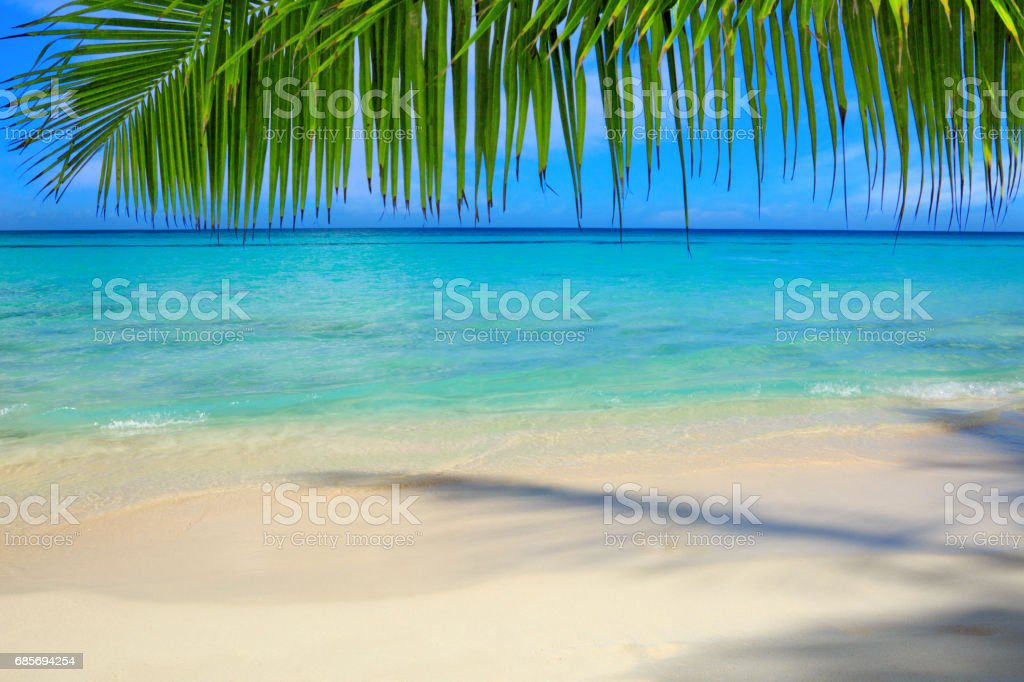 Caribbean sea and palm leaves 免版稅 stock photo