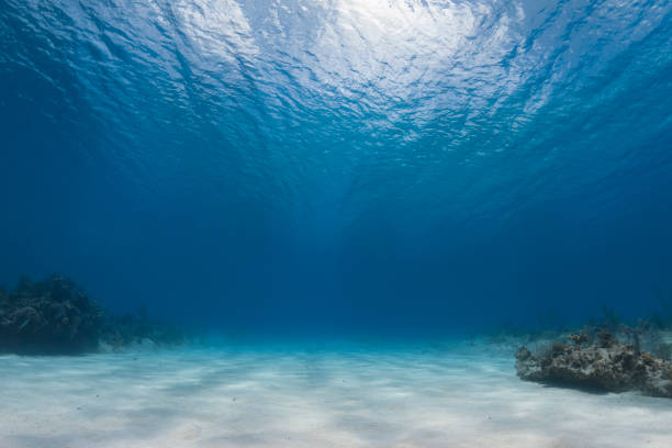 Caribbean Sea Undersea view and ocean floor in Cayman Brac Island, Cayman Islands land feature stock pictures, royalty-free photos & images