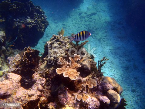 istock Caribbean sea 477696665