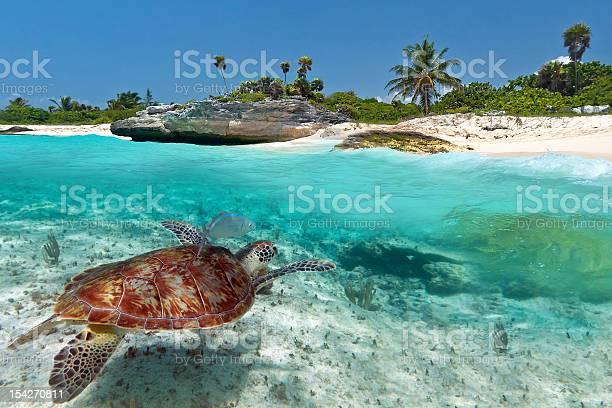 Caribbean sea scenery with green turtle picture id154270811?b=1&k=6&m=154270811&s=612x612&h=hhygdcdzbs2iylkdp46rijpgrakmejqhtxaz36ln0k4=