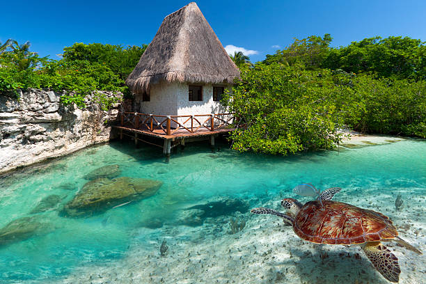 caribbean sea scenery with green turtle underwater - playa del carmen stock photos and pictures