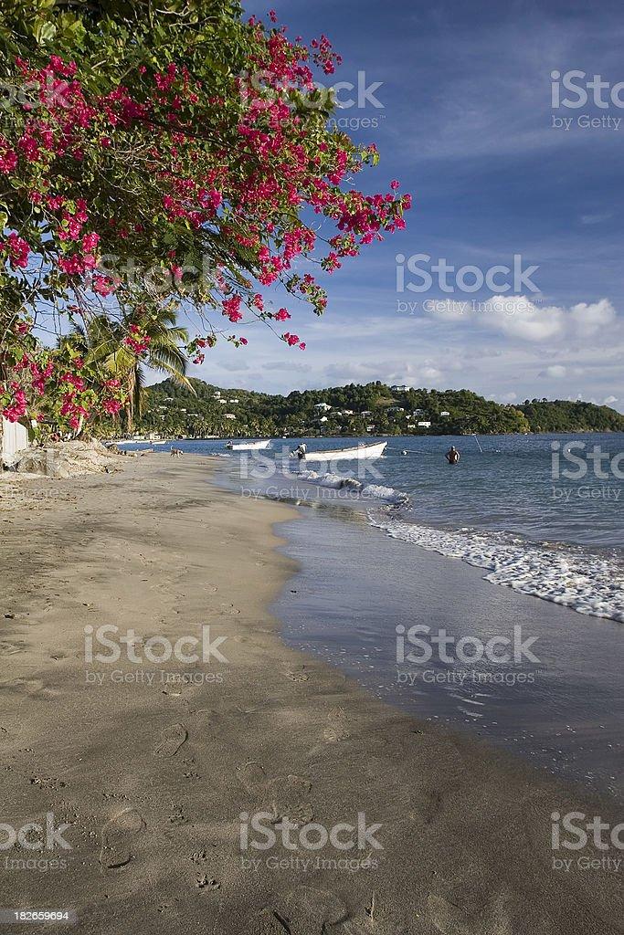 Caribbean Shore with Bougainvillea royalty-free stock photo