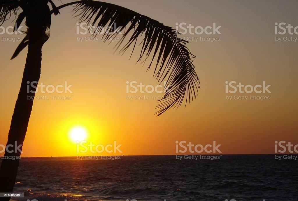 Caribbean Sunset with Palm Tree Silhouette stock photo