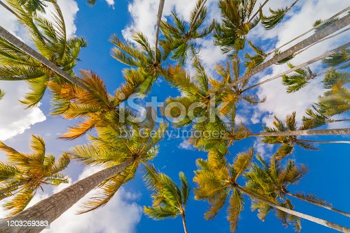 Caribbean tropical relax, under palm trees leafs – Saona Island, Dominican Republic