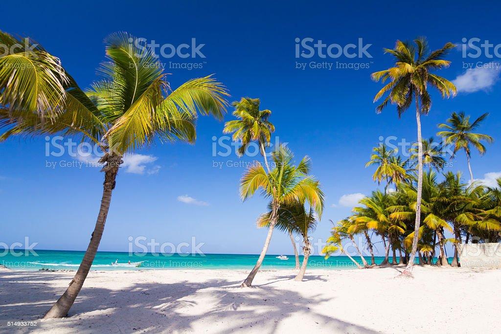 Caribbean wild beach with palm trees stock photo