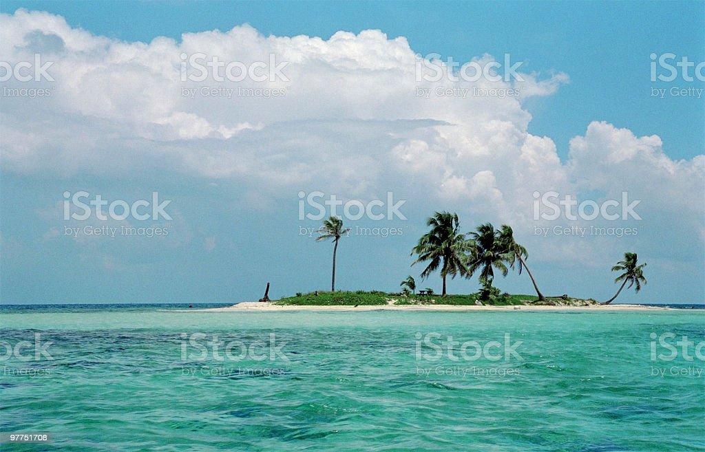 Caribian palm beach stock photo