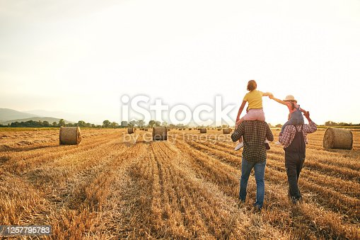 Joyful adorable playful sisters having fun with their grandfather and father on a family wheat field at the country side