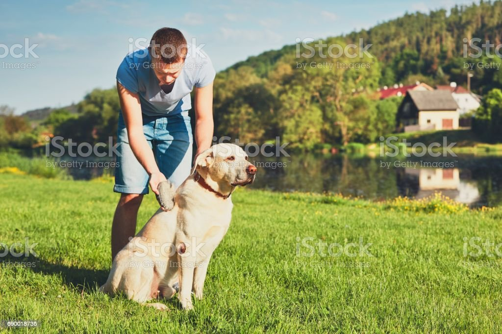 Caring for dog stock photo