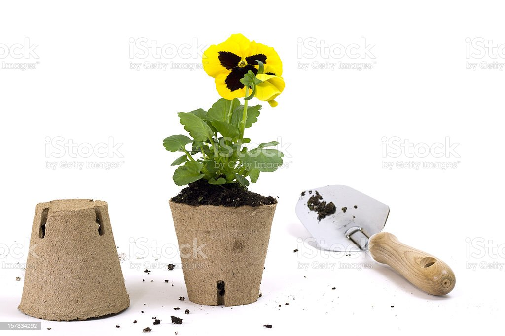 Caring for Flowers with Copy Space stock photo