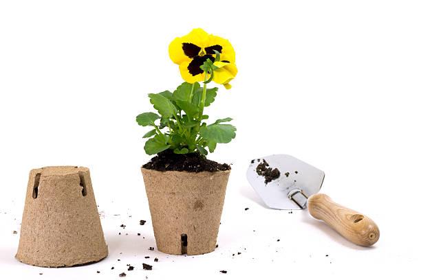 cura dei fiori con spazio di copia - biodegradabile foto e immagini stock