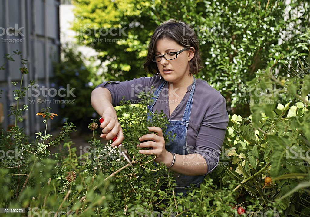 Caring for her garden stock photo