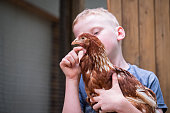 A young boy enjoys holding his hen. Teaching kids about sustainability and having point of lay hens at home.