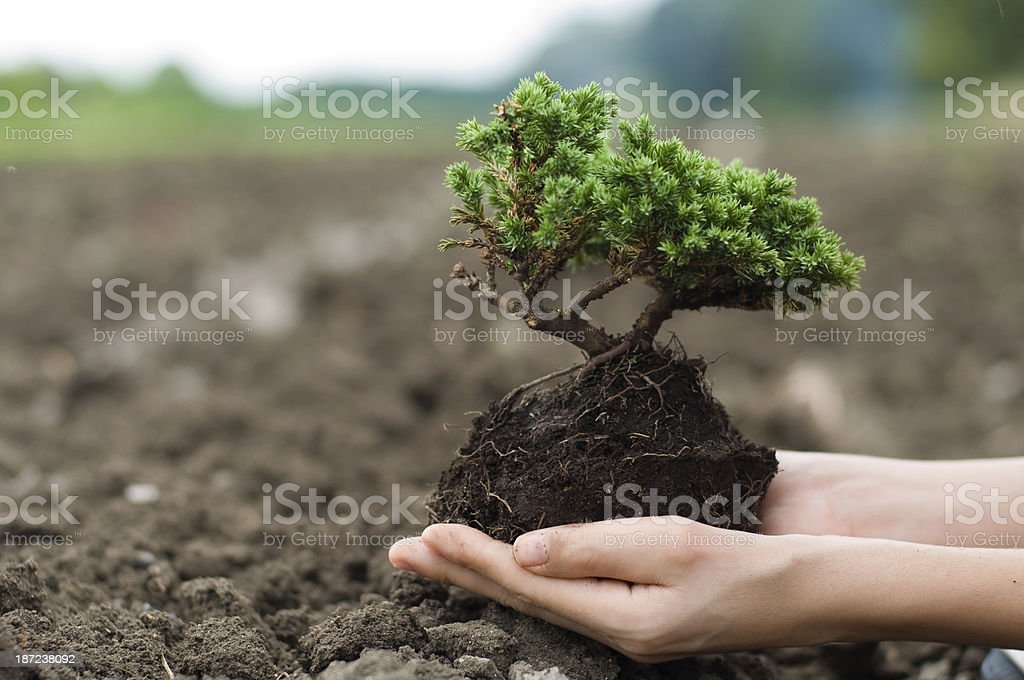 Caring for trees and the environment royalty-free stock photo