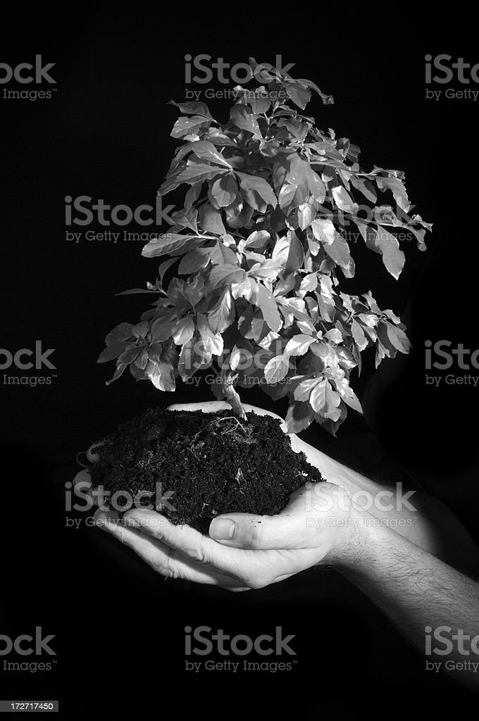 Caring for trees royalty-free stock photo