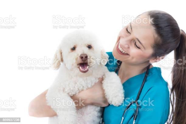 Caring veterinarian looks at cute dog picture id859937236?b=1&k=6&m=859937236&s=612x612&h=irqi0l7kwjrgkdinhwa1h7aub ycenaqmmctgzov y4=
