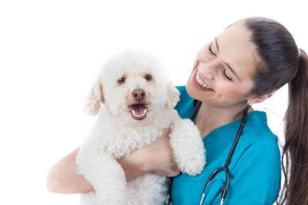 Caring veterinarian looks at cute dog picture id859937236?b=1&k=6&m=859937236&s=612x612&w=0&h=fou6fr nqz2ur 2dtgvplkfnyknawmlycabfd3aon58=