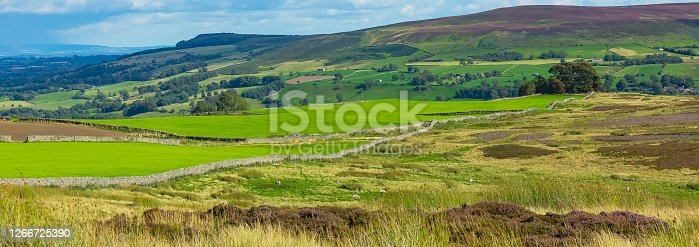 Carlton-in-Coverdale,  Yorkshire Dales, UK.  A panoramic view from Melmerby Moor, below Penhill, over the heather covered grouse moors in Summer.  Rolling green fields, purple heather and drystone walling.