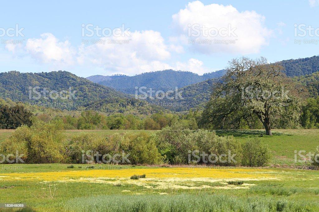 Carmel meadow royalty-free stock photo