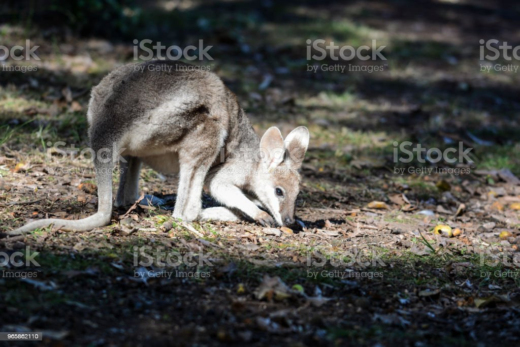 Carnarvon Gorge, Queensland - Royalty-free Animal Stock Photo