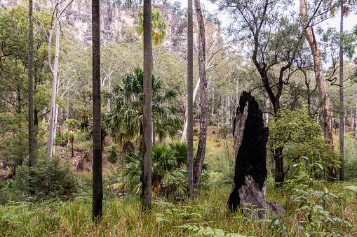 Carnarvon Gorge Queensland Stockfoto en meer beelden van Australië