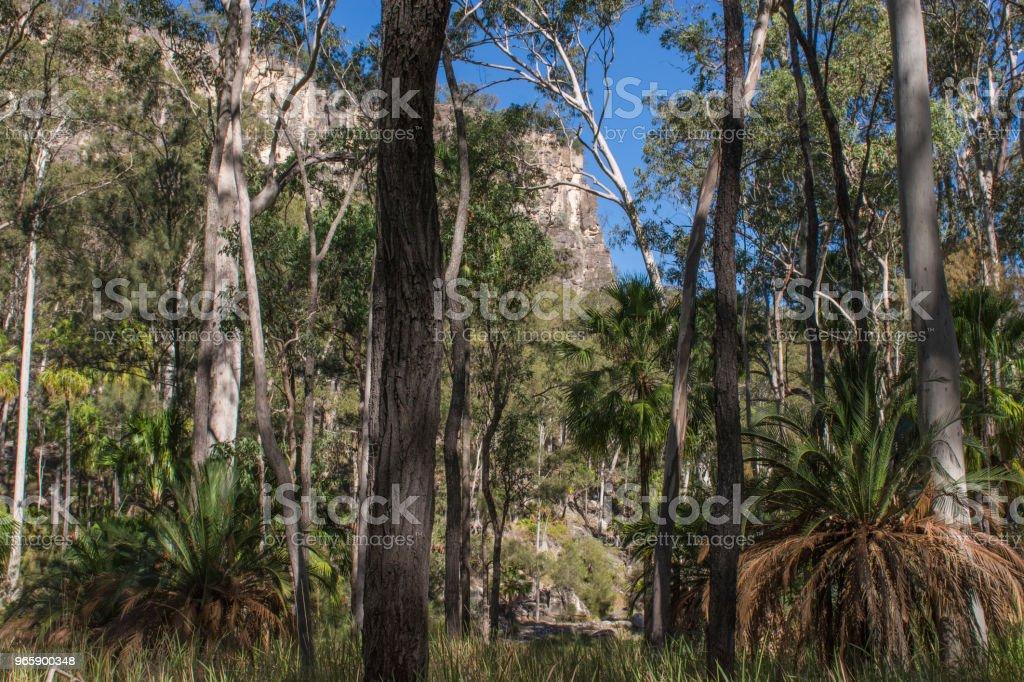 Carnarvon Gorge, Queensland - Royaltyfri Australien Bildbanksbilder