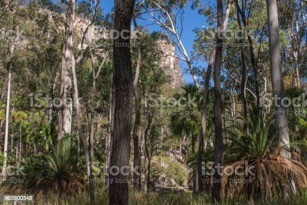 Carnarvon Gorge Queensland-foton och fler bilder på Australien