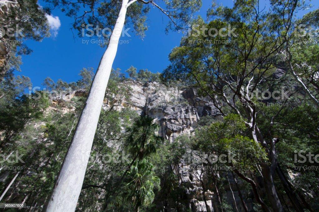 Carnarvon Gorge, Queensland - Royalty-free Animal Wildlife Stock Photo