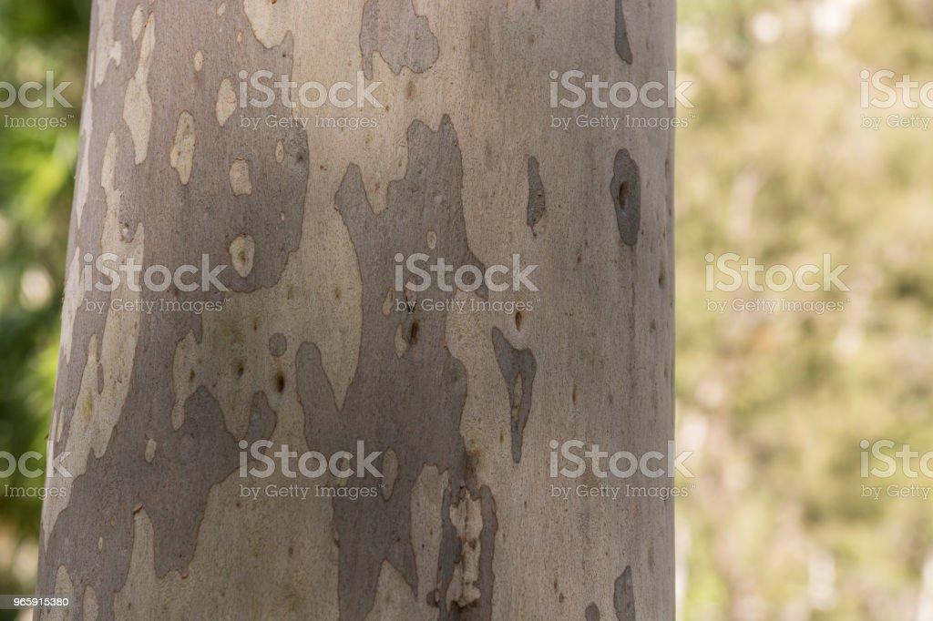 Carnarvon Gorge, Queensland - Royalty-free Australia Stock Photo