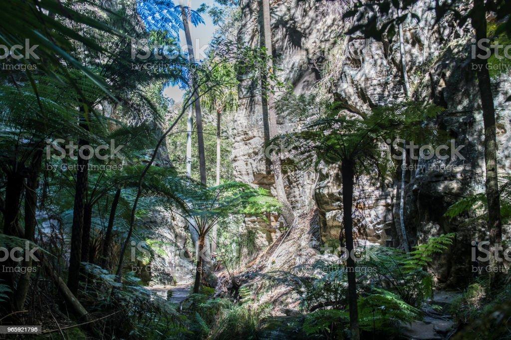 Carnarvon Gorge, Queensland - Royalty-free Australië Stockfoto
