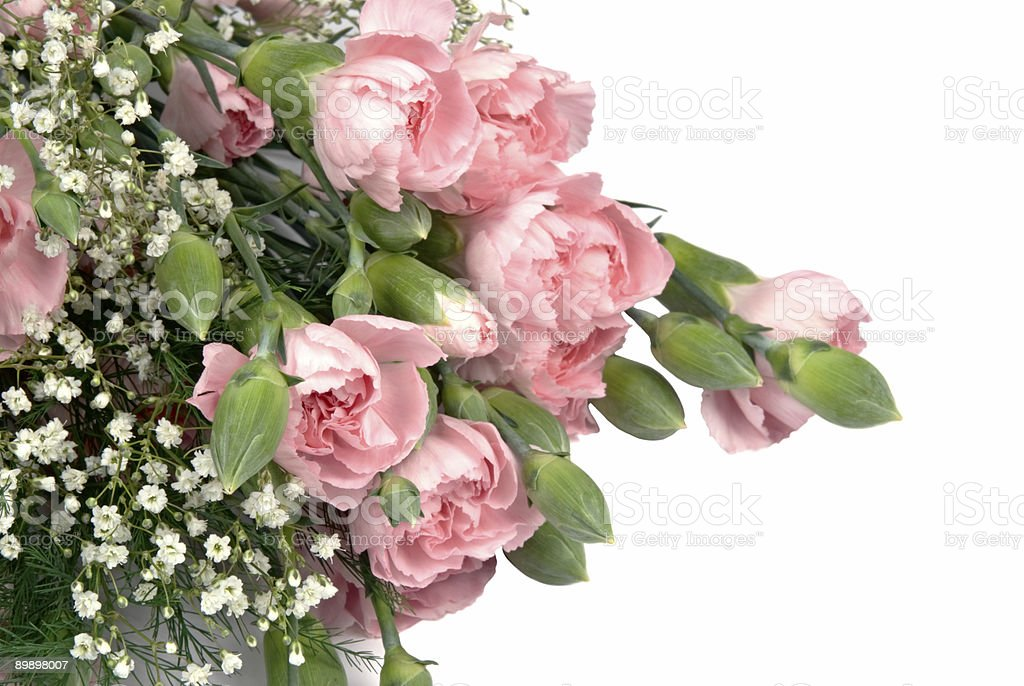 carnation and babys breath cut flowers on isolated white background royalty-free stock photo