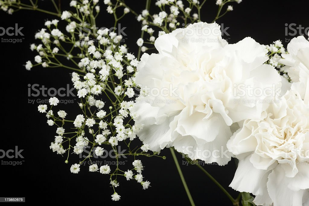 Carnation and Gypsophila Floral Arrangement, Isolated on Black royalty-free stock photo