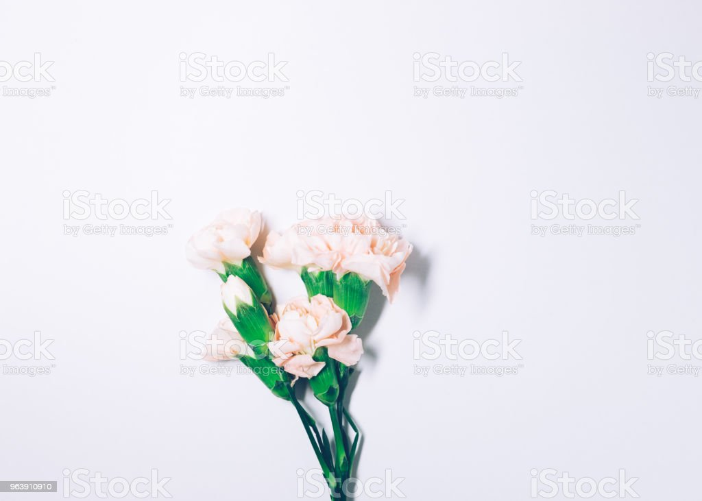 Carnation flower isolated on white background - Royalty-free Anniversary Stock Photo