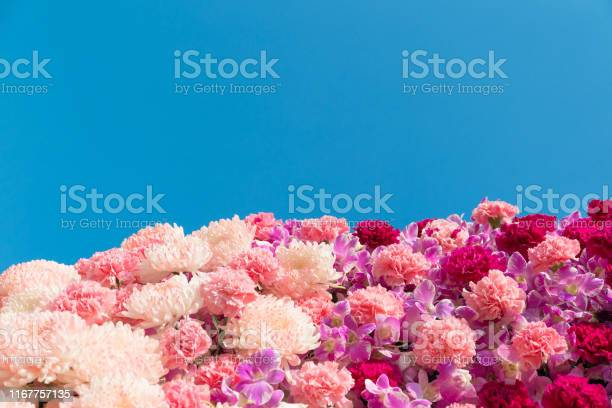 Carnation flowers and chrisanthemum flowers picture id1167757135?b=1&k=6&m=1167757135&s=612x612&h=m yprzwtj pl5aaqhdnrcr1otdus26ewgx7gqwa6ggu=