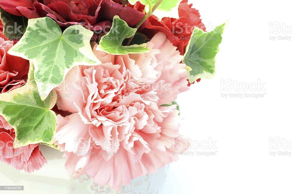 carnation royalty-free stock photo