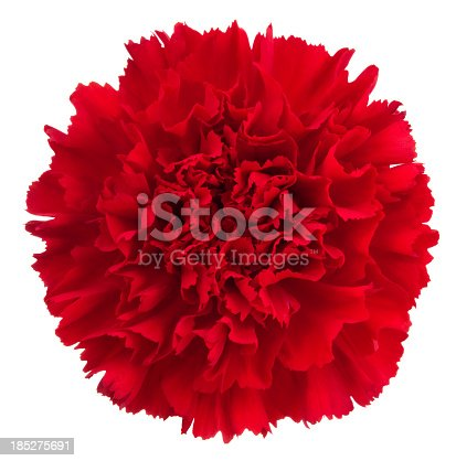 Red flower on a white background.